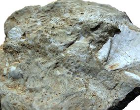3D model Bivalve Fossil Stone