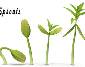 3D model Sprouts