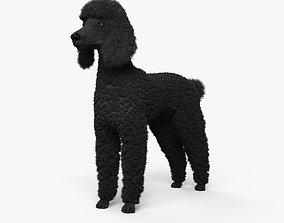 Poodle HD 3D model