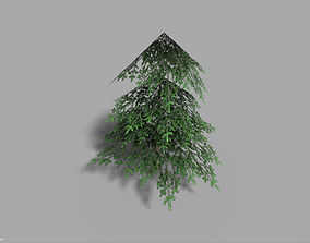 3D asset low poly small spruce