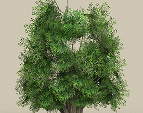 3D asset Game Ready Tree 03
