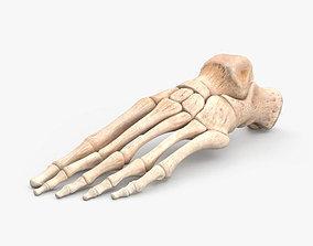 3D model Human Foot Bones