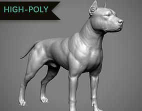 Pitbull High-Poly 3D printable model