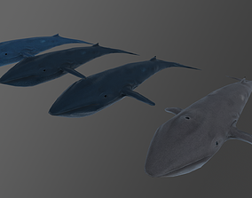 3D model Blue whale Low and Hig poly