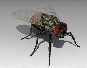 Fly Animated 3D asset VR / AR ready