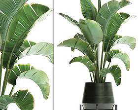 3D model Exotic plants banana tree 446