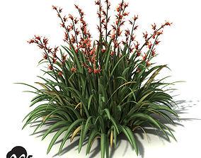 3D model XfrogPlants New Zealand Flax