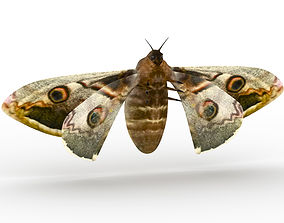 small butterfly 3D model