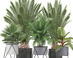 Collection of ornamental plants and Exotic plants 3D model