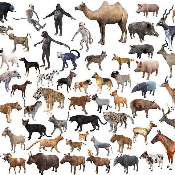 71 Mega Pet and Zoo animal collection