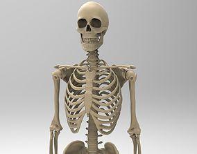human Human Skeletal System 3D