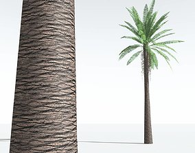 game-ready EVERYPlant Date Palm LowPoly 08 --10 Models--