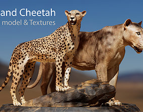 Lion and Cheetah - Digital Model and Tertures 3D asset