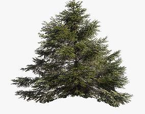 Pine Tree 001 Lowpoly 3D asset