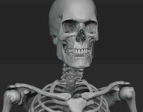 3D Male skeleton sculpt