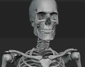 Male skeleton sculpt 3D