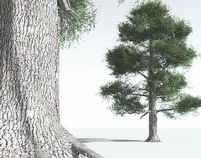 EVERYPlant English Oak LowPoly 06 --18 Models-- 3D asset