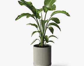 strelitzia plant 3D paradise