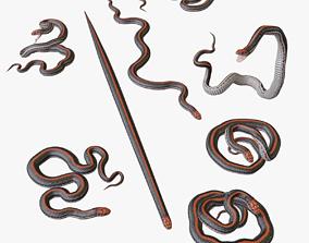 Black Orange Snake - 3D Mesh viper