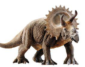3D model VR / AR ready PBR Triceratops