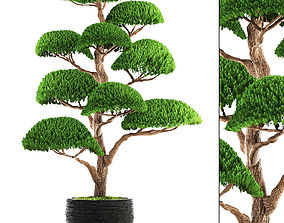 3D topiary bonsai tree