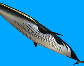 animated low-poly Whale 3D Model