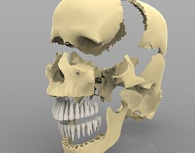 3D Skull Articulated