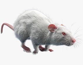 3D model Rat Fur Animated White
