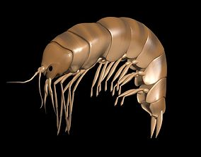 3D model Amphipoda Gammaridae