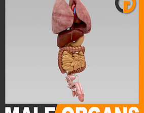 Human Body Internal Organs - Anatomy 3D