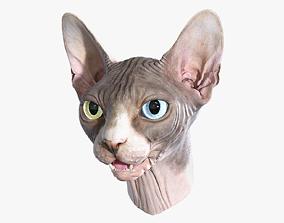 Sphynx Cat Head 3D model