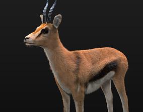 Thompson Gazelle Rigged Hairs 3D asset