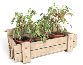 Tomato Plants in Wooden Crate 3D model