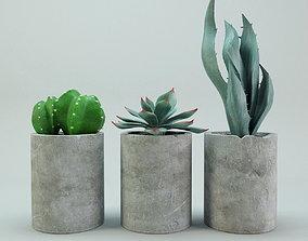 3D model Cactus potted plants