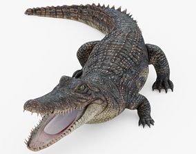 3D asset Alligator Rigged