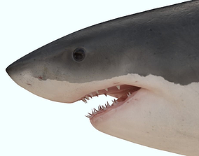 Great white shark rigged and animated for Cinema 3D asset