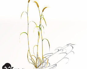 3D model XfrogPlants Barley