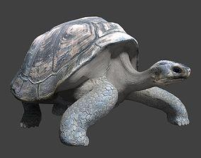 Giant tortoise 3D