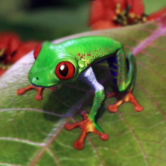 Frog fauna
