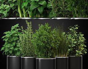 Plants collection 261 3D model