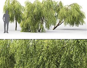 Salix 01 H260 cm 3D