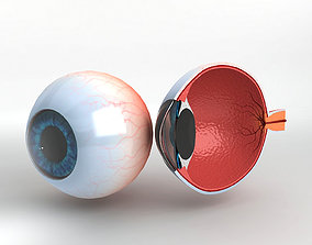 Human Eye With Cutaway 3D model