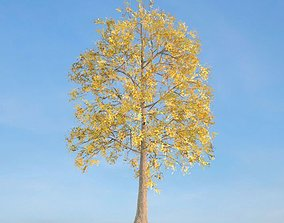 3D model Yellow Leafe Tree Fraxinus