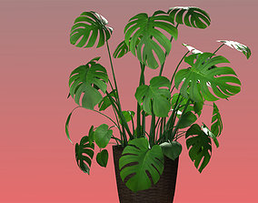 Monstera Plant 01 3D asset game-ready