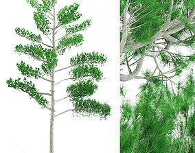 Pine tree 3D model PBR