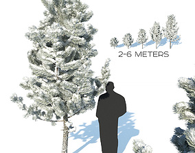 3D model Pine trees in the snow