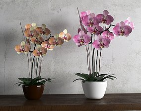 orchid flower 3D model wall
