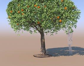 3D Citrus reticulata mandarin tree mature