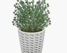 3D Plant 11
