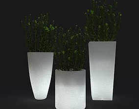 3D model Young boxwood in Led flowerpot